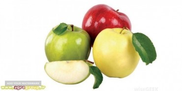 AGRO Apple Fruit Specifications