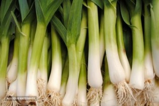 Iranian garlic exporter