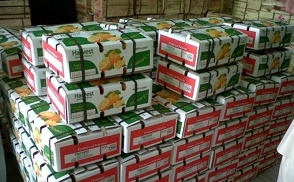 صادرات میوه به روسیه