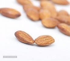 بادام درختی صادراتی برادران حسینی