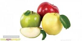 سیب مخصوص صادرات