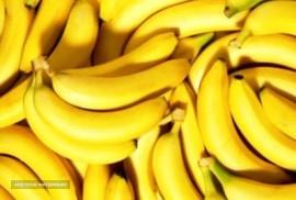 صادرات میوه به امارات