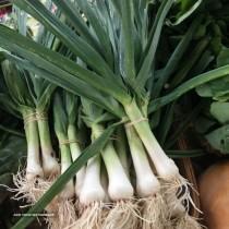 Iranian garlic distributor
