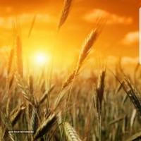صادرات محصولات کشاورزی دشت مغان