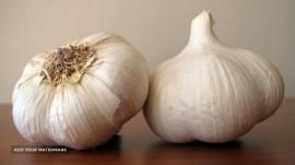 Export fresh Garlic from Iran
